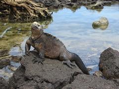 Galápagos - Isabela-81