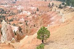 P9070159 (bluegrass0839) Tags: canyon national hoodoo bryce zion zionnationalpark brycecanyon nationalparks narrows hoodoos horsebackride parkthe