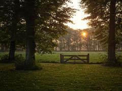 That I stand at the gates alone (Paul Beentjes) Tags: trees netherlands sunrise lumix bomen gate estate nederland panasonic katebush chateau dmv chteau marquette hek kasteel heemskerk 1235 vario landgoed zonsopkomst gh3 allthelove 1235mm