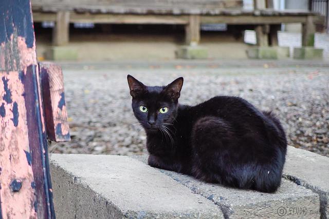 Today's Cat@2014-10-09