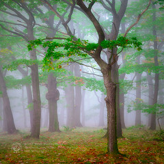 in the forest (Piotr.Krol) Tags: morning trees mist fog forest piotr poland bax krol baxteria lowersilesia