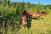 Lemmenlaakso_IMG_9296 (Holtsun napsut) Tags: park summer horses nature trekking suomi finland landscape outdoors europe hiking järvenpää hevoset hevonen kesä luonto maisemat ulkoilu luonnonpuisto retkeily lemmenlaakso patikointi