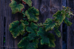 Green and burn (Daniel Kulinski) Tags: sea island photography europe mediterranean image daniel creative picture samsung poland greece crete warsaw 1977 photograhy nx kriti koutouloufari kulinski nx20 samsungnx samsungimaging danielkulinski samsungnx20