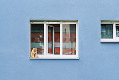 20141011-000019 (mkniebes) Tags: blue color window wall zeiss cat fenster wand curtain blau ruhrgebiet nikonfm2 gardine planart1450 zf2 kodakektar100