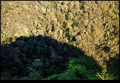 141005-4111-EOSM.jpg (hopeless128) Tags: trees australia bluemountains newsouthwales katoomba 2014