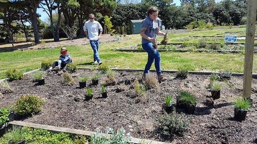 Pollinator Plantings at JC Raulston Arboretum 4