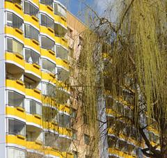 07-IMG_0412 (hemingwayfoto) Tags: architektur balkon baum baustil ddr deutschland europa fassade fenster gebäude hochhaus kultur landbrandenburg plattenbau potsdam stadt trauerweide verglasung