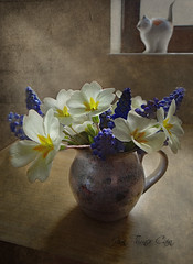 Primrose still life (Jean Turner Cain) Tags: stilllife flower flora floral flowers texture textured photoshop adobe jeanturnercain jeanturner primrose grape hyacinth blue