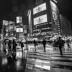 Shibuya Rain (Mario Rasso) Tags: mariorasso nikon japan crossing blackandwhite blancoynegro blackwhite umbrella rain tokyo tokio building