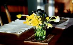 nikon n80 (bluebird87) Tags: agfa 200 vista film dx0 c41 epson v600 table flowers
