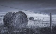 winter blues (rockinmonique) Tags: alterta hay haystack fence winter mono monochrome bw blackandwhite moody dark grey moniquew canon canont6s sigma copyright2017moniquew