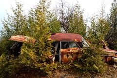 IMG_2618 (Irina Souiki) Tags: rusty crusty cars mcleansautowreckers milton ontario old oldcars