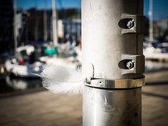Random Feather (real ramona) Tags: feather white docks marina portishead lamp post boat