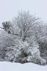 Frozen tree (pegase1972) Tags: quebec tree winter québec canada qc arbre hiver snow neige monteregie montérégie licensed dreamstime exclusive