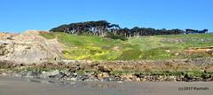 DSC_0285 (rachidH) Tags: scapes views pacific ocean sealrocks cliffhouse sutro baths tide lowtide lobos pointlobos oceanbeach sanfrancisco sf sanfran california rachidh nature