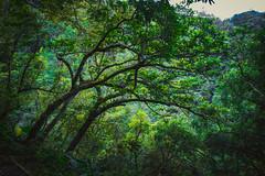 宜蘭 林美石磐步道 (monkeu67) Tags: monkeu景點介紹 春 canon 台灣 宜蘭 礁渓 林美石磐 滝 マイナスイオン 写真 撮影 観光スポット ランドマーク 雰囲気 橋 日陰 峡谷 滝観亭 反射 広角レンズ 風景