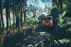 Steam train|Taiwan 阿里山蒸汽火車 (里卡豆) Tags: chiayi 嘉義 阿里山 alishan 台灣 taiwan olympus penf voigtlander 175mm f095 nokton