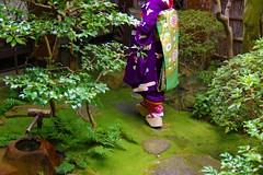 Maiko_20170306_16_1 (kyoto flower) Tags: tondaya fukuno kyoto maiko 20170306 舞妓 冨田屋 ふく乃 京都 junkikai