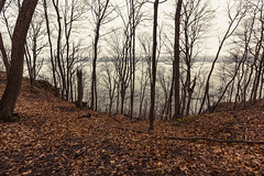 Cold Spring Morning (Tony Webster) Tags: frontenac frontenacstatepark lakepepin minnesota mississippiriver earlyspring forest leaves spring statepark trees unitedstates us