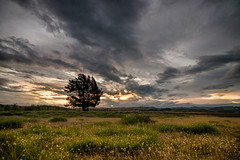 Alone I stand (lizcaldwell72) Tags: light trees sky hawkesbay newzealand sunset napier cloud