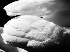 Douceur (totofffff) Tags: douceur noir et blanc em1
