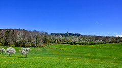 Douceur campagnarde (Diegojack) Tags: chexbres vaud suisse paysages campagnes cerisiers