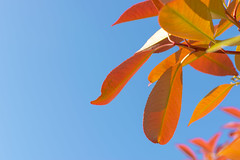 Minimal Leaves (Jeffrey Camphens) Tags: minimalistic minimal duo colors blue orange leaves leaf detail macro closeup art experimental