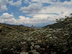 Cloudy flowery infinite horizon (HockeyholicAZ) Tags: arizona sr87 northernarizona payson rye gisela duthiemartinhighway beelinehighway mountord mogollon mogollonrim buckwheat zydeco meditation calm peaceful infinity horizon mountain highcountry