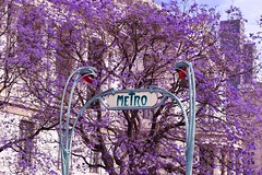Metro Bellas Artes (rhv_pic) Tags: subway cdmx mexicocity jacaranda city flower spring bellasartes