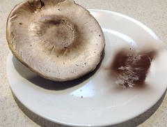 Mushroom spores on white plate from overnight. (spelio) Tags: australia 2017 email act ipad iphone fungi spores mushroom tbid