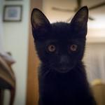 Black kittens are lovely too! 😁 thumbnail