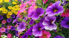 Little Bits of Pretty. (TyroCharm) Tags: mayflowers colors spring rainbow violet flowers floweroftheday