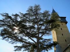 L'ancien (Doonia31) Tags: arbre ciel clocher église gers gascogne toit horloge tour branches soleil ombres barran france compostelle