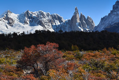 Cerro Torre among the blazing trees - Argentina (Cyrus Smith NW) Tags: patagonie patagonia mountain montagne torre argentine argentina el chalten automne autumn leaves feuilles sommet aiguille arbres feuillage neige glacier