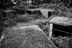 Arne AA Battery - Photocredit Neil King-22 (Neilfatea) Tags: arne aa antiaircraft wwii bw decay nature reclaims
