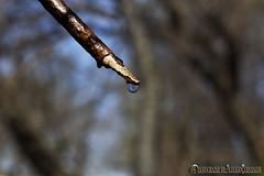 GOTA DE AGUA, GOTA DE VIDA. DROP OF WATER, DROP OF LIFE. NEW YORK CITY. (ALBERTO CERVANTES PHOTOGRAPHY) Tags: drop water gota de agua life vida