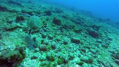"""Fly away... (:: through my eyes ::) Tags: fernandodenoronha """"fernando de noronha"""" noronha brasil brazil brasilien brésil paraíso paradise ilha arquipélago island mar sea azul blue """"imensidão azul"""" """"big blue"""" oceano ocean atlântico atlantic plage strand beach sand areia barco boat gopro underwater sub scuba """"scuba diving"""" mergulho mergulhador mergulhadora diver atlantis """"atlantis divers"""" tartaruga turtle tortoise """"ponto mergulho"""" """"diving spot"""""""