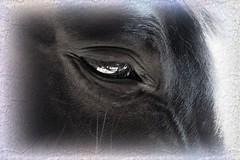 Tired horse after a long ride. (detlefgabriel17) Tags: pferd horse auge eye pferdeauge horseeye closeup nahaufnahme