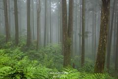 Dongyanshan, Taiwan (g u i l l a u m e) Tags: dongyanshan dongyan mountain taiwan forest fog green mist