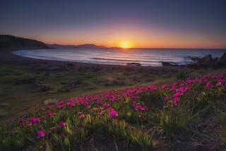 Beach Flowers (BIZKAIA)