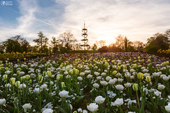 Stuttgart Killesbergturm Park Landscape Flowers Spring April Beautiful Sunset Outdoors Scenery Germany Europe (HunterBliss) Tags: aerial architecture attraction badenwurttemberg blue botanical capital city environment europe field fresh garden geometric german germany grass green high killesberg landmark landscape meadow metal natural nature outdoor panorama park people romance romantic round scenery shape sightseeing sky south spring step stuttgart summer tall tourism tower travel tree urban vacation view