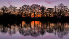 Silhouettes (Warwick Tams) Tags: trees sunset branch canon 5d mk iii colour magenta silhouettes reflection water poynton pool 16x9 169 clear long exposure lake