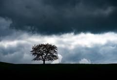 stormy sunday (rainerralph) Tags: olympus baum tree objektiv1240pro lowkey omdem5markii weather wolken wetter