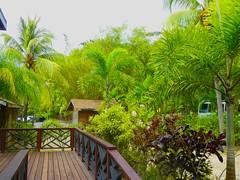 Version 2 Roatan Honduras Anthony's Key Resort April 2017 (bermudafan8) Tags: 2017 spring break bermudafan8 roatan honduras anthonyskeyresort