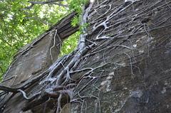 Le temps... (RarOiseau) Tags: madagascar nosybe marodoka ruine nature histoire