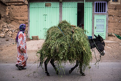 Marcher (cafard cosmique) Tags: africa montagne photography photo foto image northafrica femme morocco maroc atlas maghreb marruecos marokko marrocos afrique ne afriquedunord  labeur aitbougmez