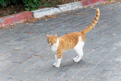 Academic cat at Technion (Haifa, Israel)