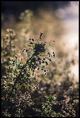 Lit (Lens Bubbles) Tags: vintage lens bokeh sony a7 retina 200mm schneiderkreuznach f48 telexenar