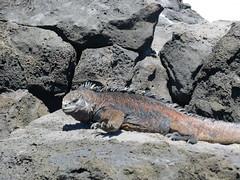 Galapagos - San Cristobal-74