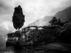 Cypress, textured. (beatebg) Tags: bw italy lake tree texture nature olympus sw cypress monochrom mystic omd lagodicomo comersee schwarzweis em5
